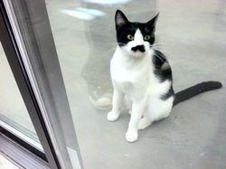 Woofstock Cat 3