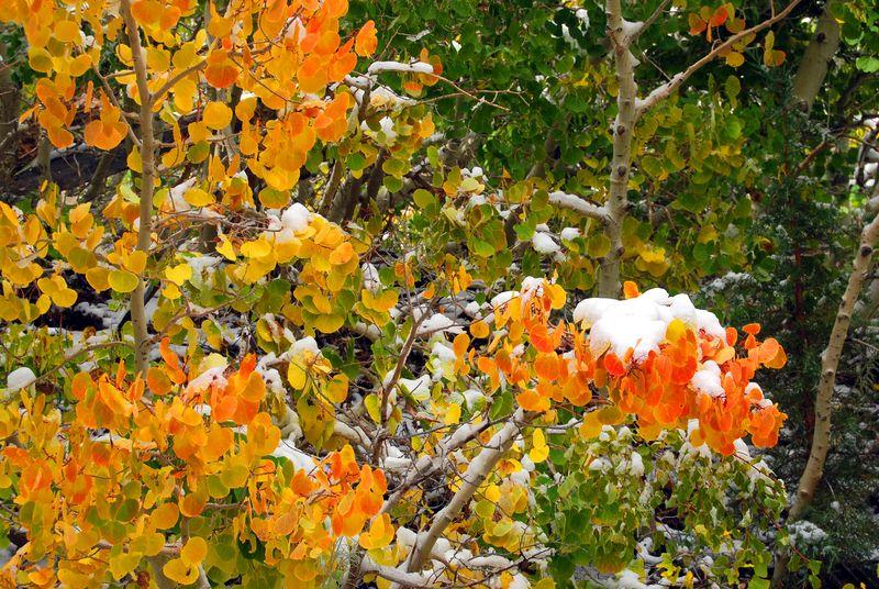 Fall Foliage - Rock Creek Canyon