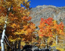 Fall Foliage - Lundy Trees