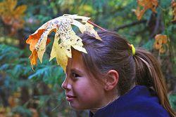 Fall Foliage - Chyanne Morrison