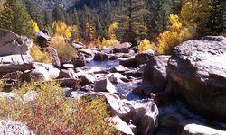 Fall Foliage - Markleeville 2