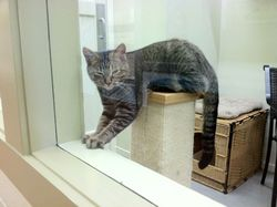 Woofstock Cat