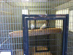 Woofstock Birds 2