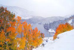 Fall Foliage - Rock Creek Canyon 3