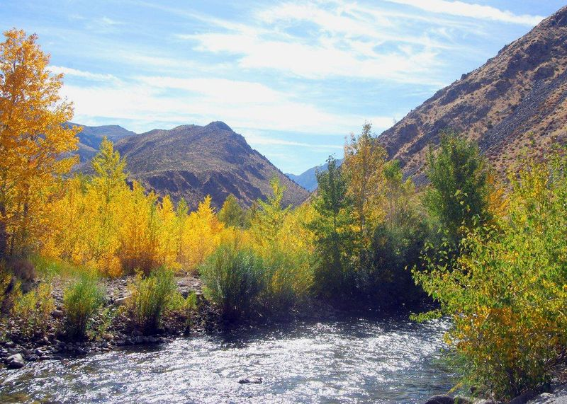 Fall Foliage - West Walker River